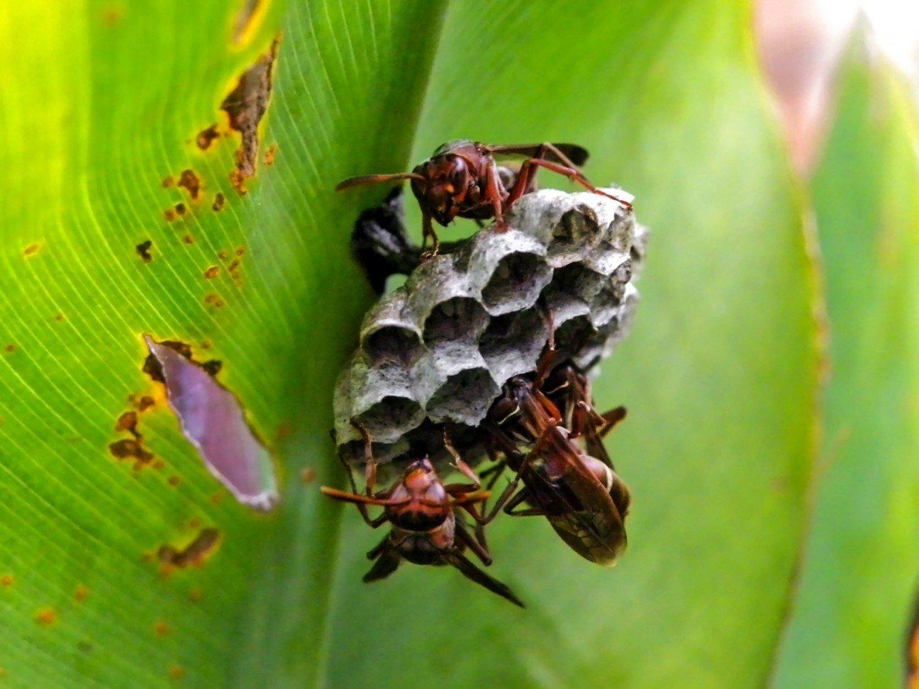 Пчелиный укус в любовном гнездышке 6 фотография