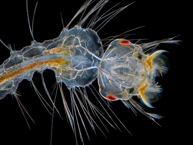 Конкурс микрофотографии Nikon Small World 2017
