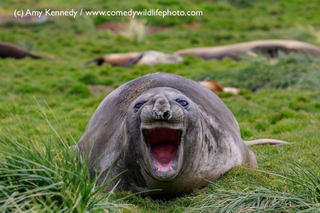Необычный конкурс Comedy Wildlife Photography Awards 2018
